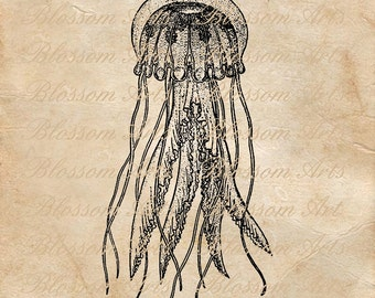 JELLYFISH Graphic Image Download Instant Download Scrapbooking Digital Collage Sheet
