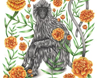 Grey Langur Monkey - Giclée Print, Edition of 50