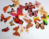 E18 Orange UNCUT Butterfly pack - 20 per pack - scrapbooking, card making, crafts