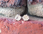 Crinoid Fossil Stud Earrings