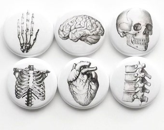 Human Anatomy Magnet Button Pin Badges Coaster teacher gifts brain skull science anatomical heart geekery stocking stuffer party favor goth