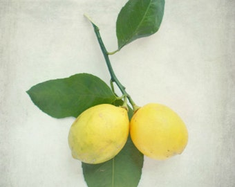 "Lemon photograph fruit citrus art lemons tree branch vintage kitchen yellow green white still life  ""Duo"""