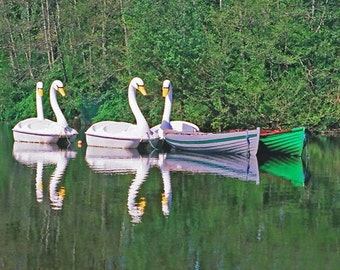 County Mayo, Ireland Photography, Swan Boats, Irish Landscape, Row Boats, Westport House, Irish Print, Boats On Lake, Wall Decor, Art Print