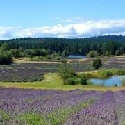 LavenderBeads