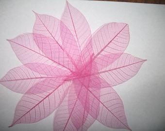 Pink Skeleton Leaves