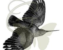 Digital Vintage Bird Clip Art Printable Image Transfer Instant Download Iron On Animal 225
