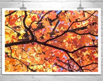 Fall Picture, Autumn Art, Fall Leaves, Maple Leaf, Giclee Canvas, Leaf Art, Tree Art, Botanical Print, Tucson Mountains, Canvas Print