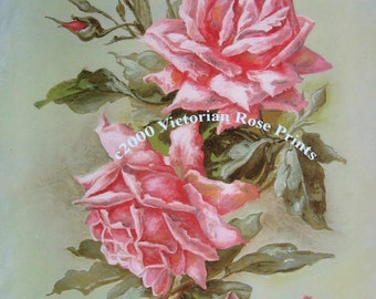 Art Print, Catherine Klein, French Pink Cabbage Roses, Half Yard Long, Shabby Chic Decor, Vintage Roses, CP332