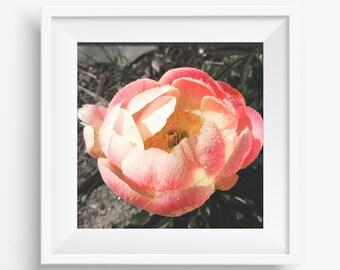 "12x12 Wall Gallery Art ""Rose"" - Digital Download"