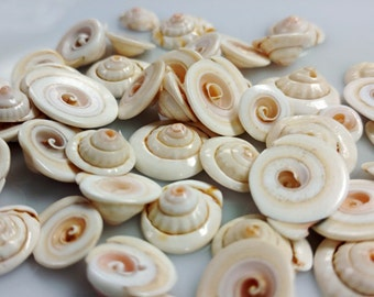 Natural Spiral Shell Beads - GM405