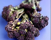 Organic Early Purple Sprouting Broccoli Heirloom Vegetable Seeds