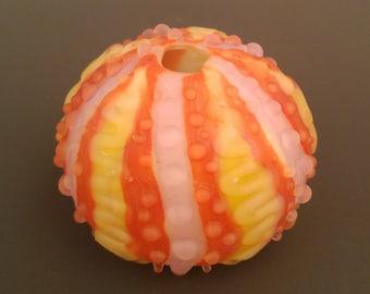 Coral Sea Urchin Shell