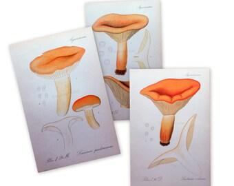 1912 Antique Mushroom Prints - Set of 3 Prints - Set No. 4