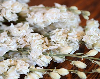 10 Dried Larkspur bunches-Purple-Pink-Blue & Ivory preserved flowers-4-5 oz bundle shown here in white-Dried wedding floral in white
