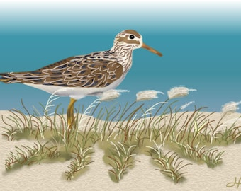 Painting ACEO Sandpiper, Beach, Ocean, Original Graphic Design Art Card