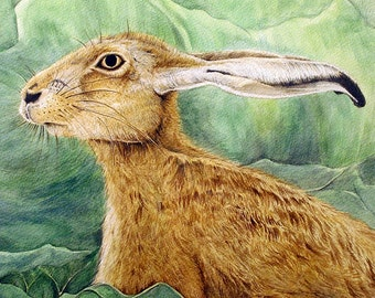 The Restful Hare - Watercolour Art Print (8 x 8 inches)