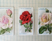 1926 Roses Tobacco Cards by W.D.& H.O. Wills No. 43-45
