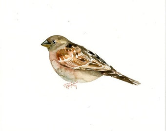 SPARROW Original watercolor painting 10x8inch