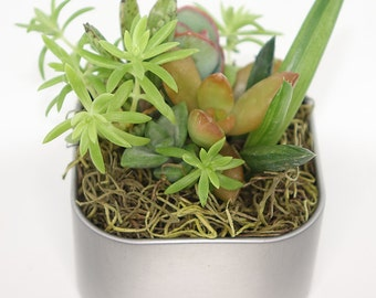 "Mini Variety Mix Garden Magnet - 2"" Magnetic Fairy Garden - Succulent, Haworthia, Cactus, Aloe, Sedum - Office, Room, Locker, Cubicle"