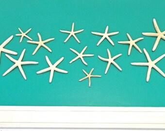 """Beach Decor - Wall Mounted Natural Starfish - Set of 11 - 2""""-5"""" Ready to Hang"""
