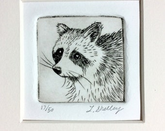 Raccoon Etching by Artist - Lora Shelley