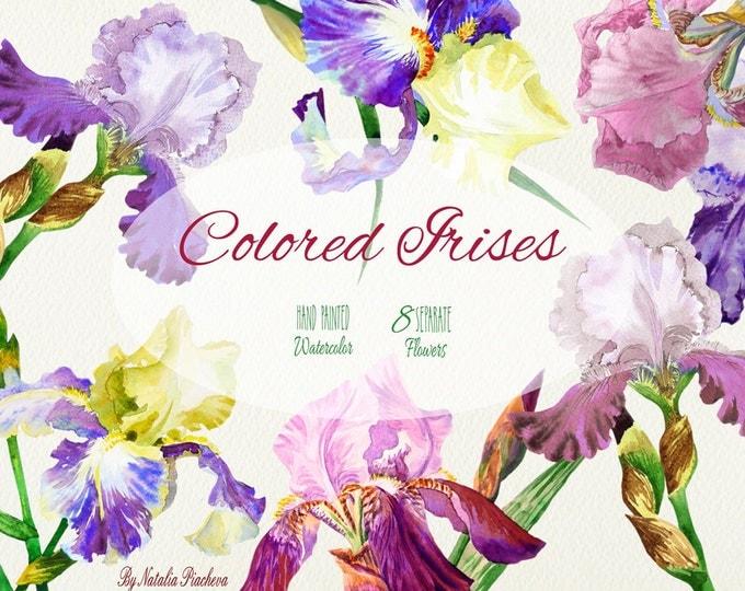 Colored Irises. Watercolor Clip Art flower, clipart, garden, iris, flowers clipart, floral clipart, wedding invitations, bouquet, iris