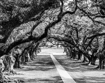 Black and White Oak Alley Plantation Fine Art Photograph, Louisiana Picture, Oak Trees, Antebellum Landscape Photography