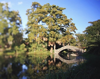 "New Orleans Photography ""City Park Reflections"" trees, bridge, louisiana home decor wall art"