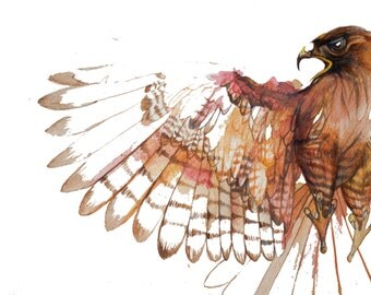 minimalist watercolor print: First Hawk