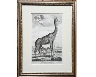 1751 FRAMED GIRAFFE ENGRAVING - original antique print - African safari animal - engraving by Diderot - ready to hang!