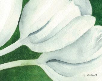 White Tulip Original Watercolor Painting