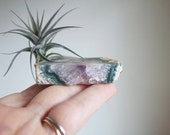 Air Plant on Amethyst Geode Slice, Crystal, February Birthstone, Crystal Airplant Display, Unusual Gift For Her, One Of A Kind