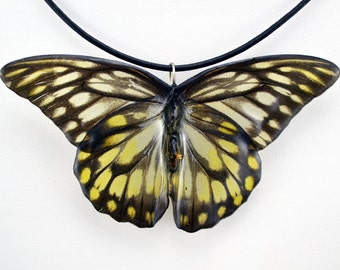 Real Butterfly Necklace - Painted Jezebel - Hand Cast Resin