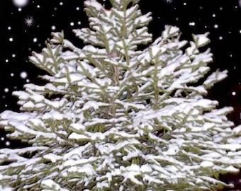 SNOWY TREE Photo Greeting Card (5x7)