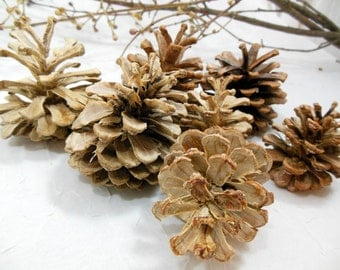 Natural Bleached Pine Cones Hostess Gift, Holiday Decor, Home Decor
