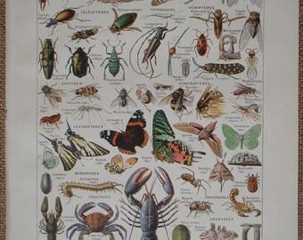 ARTHROPODES Invertebrates an original Antique French book illustration by Demoulin, Larousse Universel Published 1922