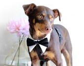 Wedding Tuxedo HARNESS, Wedding Dog harness for ring bearer, Dog Wedding Accessory, Metal buckle upgrade available