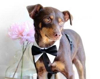 Wedding Tuxedo HARNESS, Wedding Dog harness for ring bearer, Dog Wedding Accessory, Metal buckle upgrade available