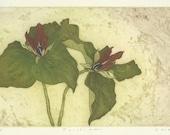 Trilliums, Original Etching of California Wildflower