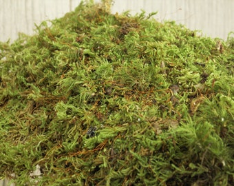 Gallon Bag Live Feather Sheet Moss for Transplant or Use Between Patio Stones