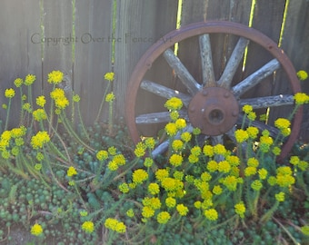 Country Garden Photo Card Wagon Wheel and Flowers