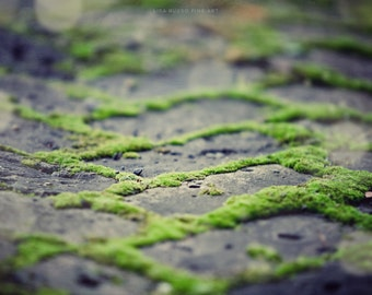 Green Wall Print or Canvas Art, Rustic Home Decor, Zen Nature Photography, Chevron, Green Moss, Antique Grey Bricks, Brick Path, Peaceful.