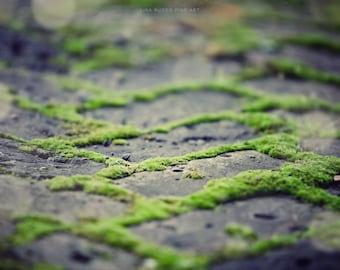Green Wall Art, Rustic Home Decor, Zen Nature Photography, Chevron, Green Moss, Antique Grey Bricks, Brick Path, Peaceful Decor, .