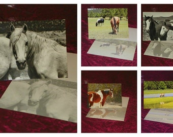 Horse Assortment Note Card Set #2