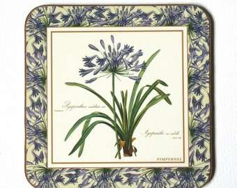 Botanical print coaster set, Pimpernel, Royal Horticultural Society, Redoute