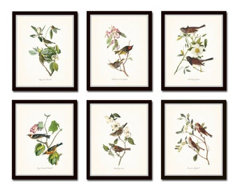 Audubon Bird Prints Set No. 1 - Vintage Bird Prints - Giclee Canvas Art Print - Print - Poster - Wall Art - Natural History Art