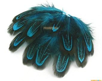 50 Pieces Blue Feather 4-7cm (YM228)