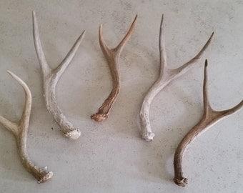 Five real deer antlers design decor crafts art centerpiece gift rustic natural antler sheds lamp display