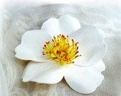 Cherokee Rose White Hair Clip