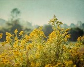 Rustic Flower Photography, Country Picture, Yellow Farmhouse Artwork, Wildflower Photograph, Retro Nature Art Print, Goldenrod Photo